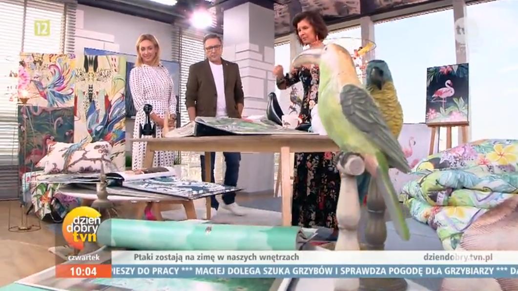 papugi-miloo-home-dzien-dobry-tvn